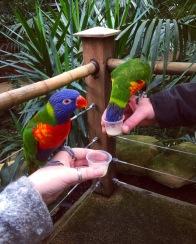 birds at zoo.JPG